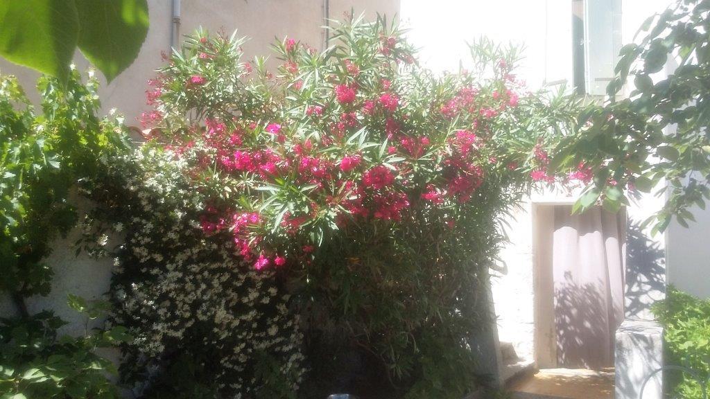 sortie_carcassonne (13)